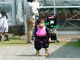 横浜近郊で、幼児も安心なクリ~ンないちご狩り♪