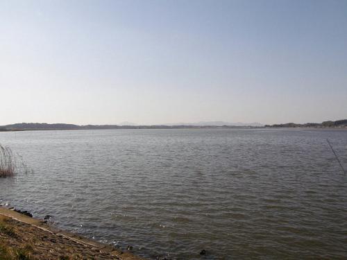 涸沼でバードウォッチング [2009](1)
