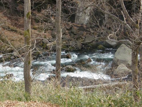 秋保温泉でバードウォッチング [2009](1)