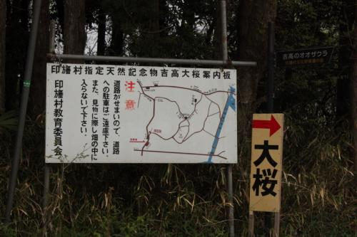 桜見るのも一苦労~ 吉高の大桜 in印旛村
