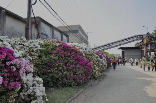 つつじの通り抜け/浅香山浄水場・堺