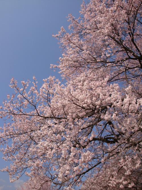 山高神代桜・王仁塚の孤高の桜と山梨県立美術館