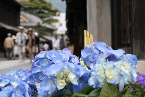 ひとり旅 [520] たけはら竹まつり?<美しい伝統 町並み保存地区>広島県竹原市