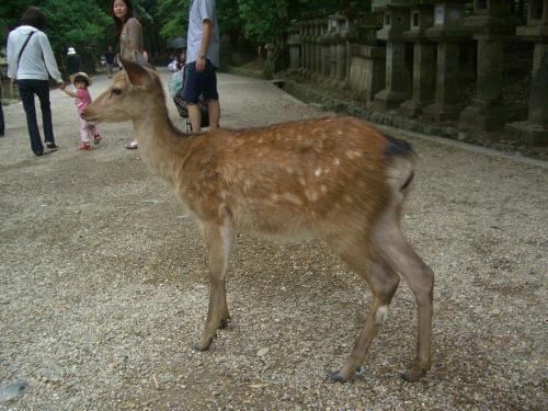 鹿男あおによしロケ地を訪ねて