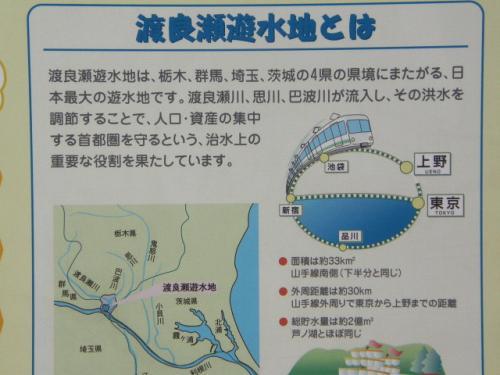 渡良瀬遊水地でバードウォッチング [2009](1)