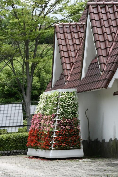 ひとり旅 [561] 花みどり公園<熱帯果樹温室に咲く花>広島市安佐北区