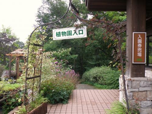 レンゲショウマ咲く但馬高原植物園