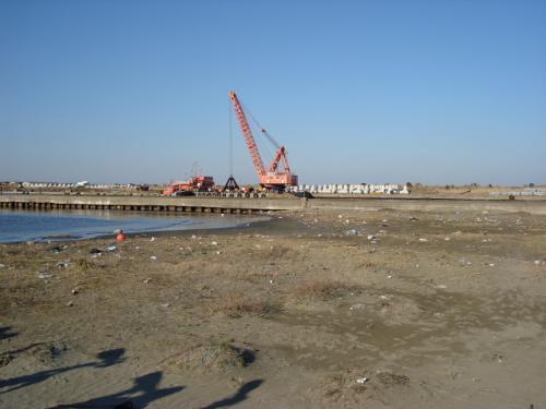 片貝漁港でバードウォッチング(1)