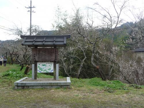 約1万本の梅が咲く『月ヶ瀬梅渓』(奈良市月ヶ瀬)
