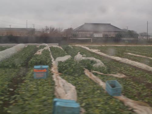 イチゴ狩りに茨城へ@深作農園。春先どり満喫の日帰り旅行。