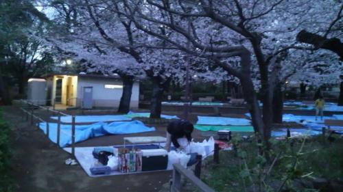 2010年4月 洗足池の桜を観に行きました( ^^) _旦~~