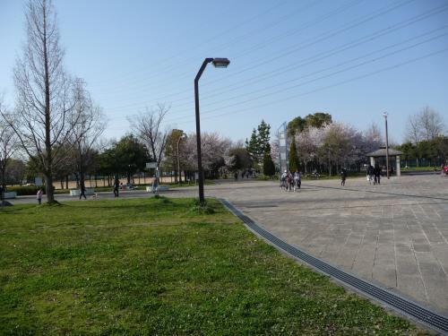 2010年桜だより◆深北緑地で花見♪(大阪府大東市)