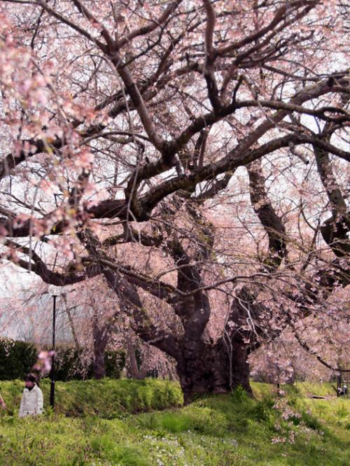妖怪に誘われ春の山陰一泊二日の旅 大山編