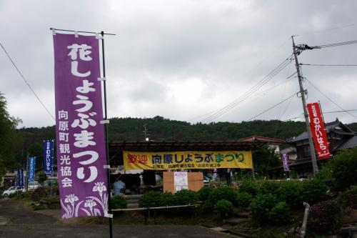 ひとり旅 [740] 色鮮やかな♪花しょうぶが咲いていました。<向原花しょうぶ祭り>広島県安芸高田市