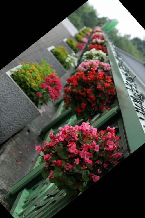 ひとり旅巡行記 [750] ♪初夏の花物語♪おしゃれな花たち≪さとやま展示館/国営備北丘陵公園≫広島県庄原市