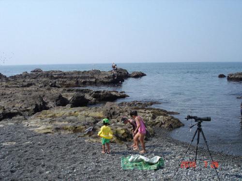 湘南海岸でバードウォッチング [2010](1)