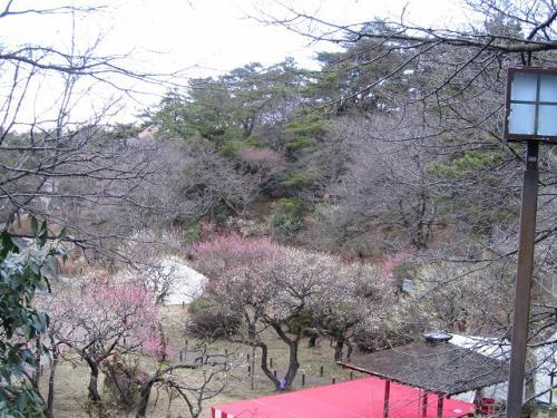 横浜:歴史のある大倉山梅園は、古木の姿を観賞してね。