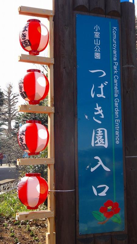 小室山公園 椿園