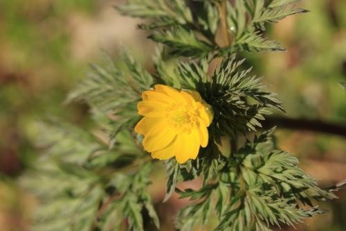 いろんな花が咲き始めています。府立花の文化園