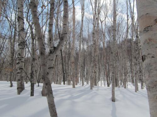 snowboad in niseko*