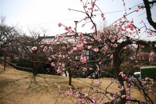 Solitary Journey [875] 想い出さがしの旅 <梅の花が満開でした!大和郡山城跡&郡山金魚資料館>奈良県奈良市