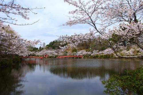銚子/九十九里/白子ぐるり旅【1】~日本さくら名所100選【1】~茂原公園2011