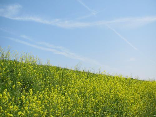子どもと一緒に行く、南山城の背割堤・地蔵禅院・玉川堤での麗らかな春の一日
