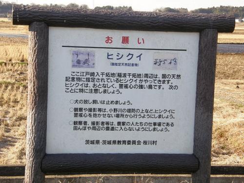 江戸崎でバードウォッチング [2011](1)