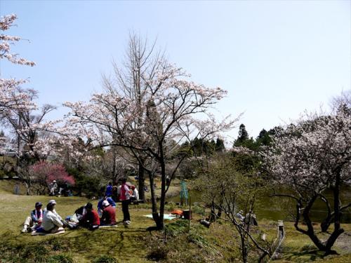 耶馬溪散策 満開のさくらと耶馬溪町「桧原(ひばる)マツ」のお田植え祭 2−2