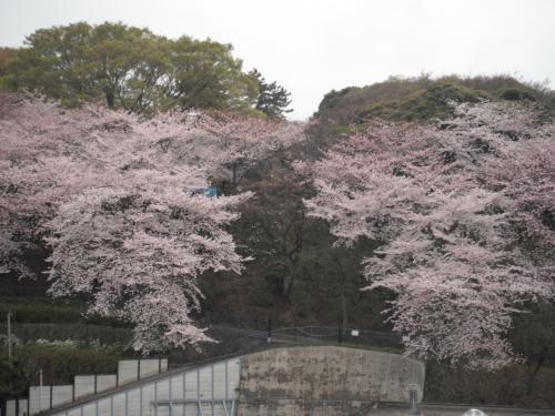 2011春 南房総