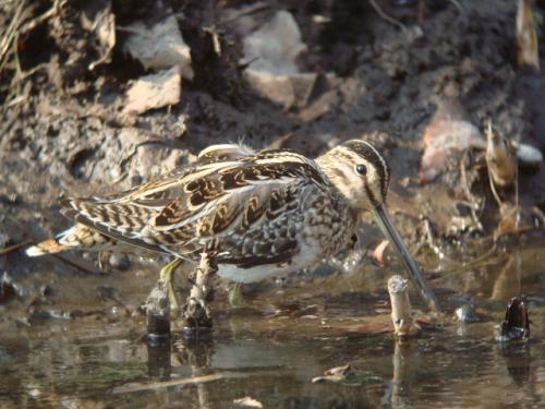 北本自然観察公園でバードウォッチング [2011](1)