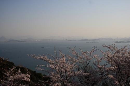 王子が岳からの桜