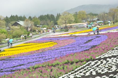 春色の中九州