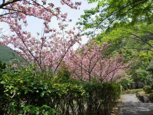 旭川上流の滝群(二重滝・布引の滝・出合滝)◆奈良県十津川村の滝めぐり【その2】