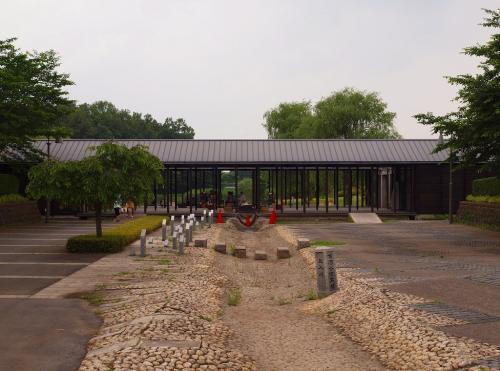 穏やかな 梅雨時のある日 古河総合公園で 花菖蒲を