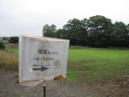 草加の枝豆と紫陽花☆2011/06/26