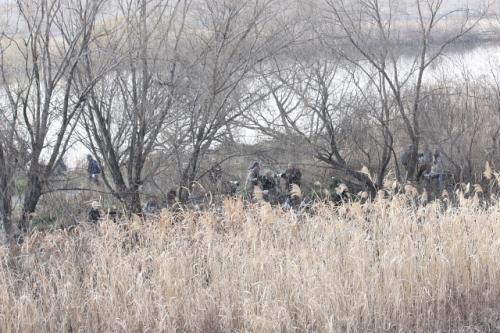 江戸川河川敷でバードウォッチング [2011](1)
