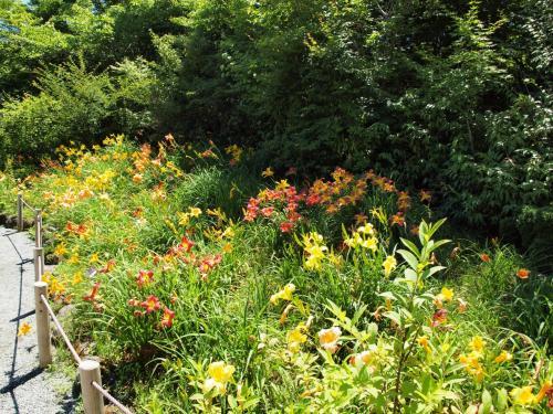 気持ちのよい夏の青空の下、箱根仙石原にあるバリアフリーの箱根湿生花園を散策 2011年7月