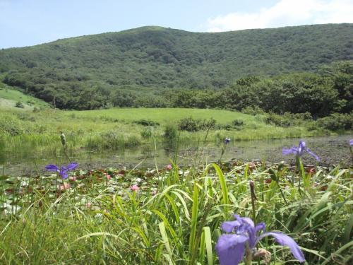 7月24日、今日、出会った 吾妻山の花々