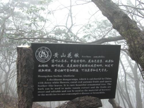 杭徽之旅(2)天下第一奇山 黄山...