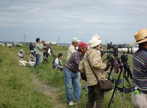 稲敷市でバードウォッチング [2011](1)