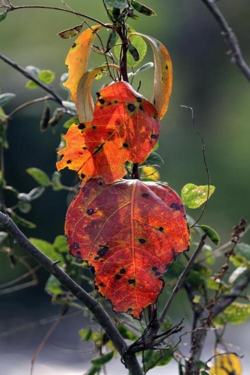 Solitary Journey [954] 秋の深まりを感じて②・・・白壁の町並みを彩る'手作り案山子'<上下町'白壁の道'編>広島県府中市