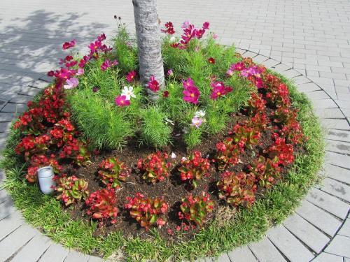 平塚 花菜ガーデンの9月 【リコリス・ムクゲ・クレマチス】