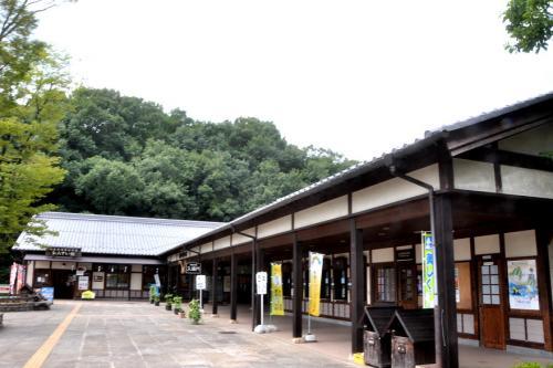 2011 昭和村向日葵