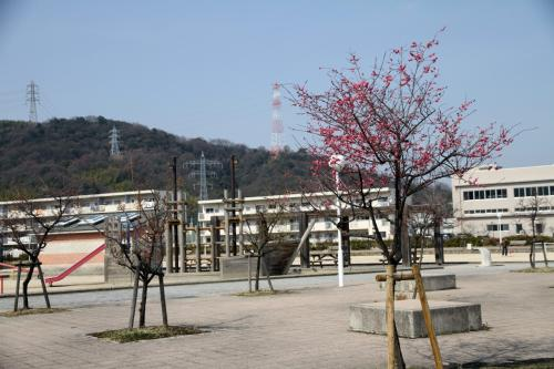 Solitary Journey [999] 広島海田湾沿いの公園でやっと梅の花が咲きました。<平成ヶ浜中央公園&横浜公園>広島県安芸郡坂町