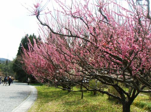 寿長生の郷に春が来た