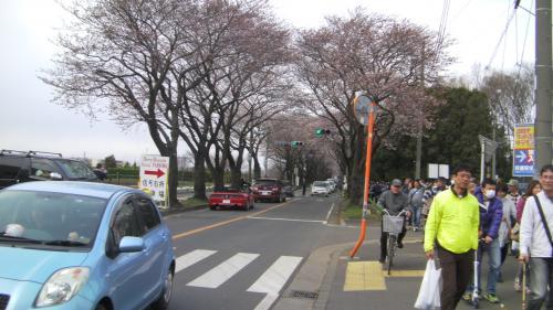 上瀬谷と座間の米軍桜まつりをハシゴしました(笑)