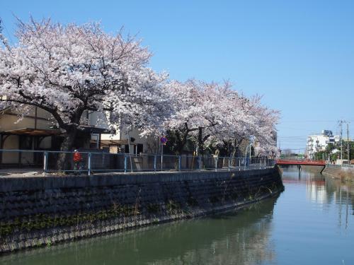 下総桜の名所そぞろ歩き~真間山弘法寺の伏姫桜と中山法華経寺の五重塔~