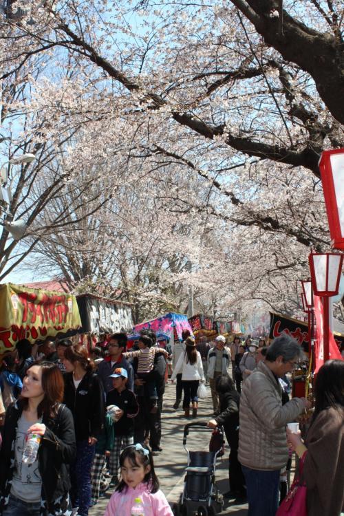 2012年4月 熊谷桜堤 & よさこい祭り
