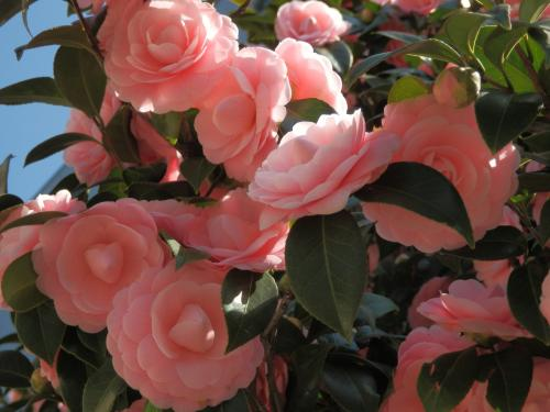 夕暮れ前から夜闇まで、幻想的な桜の色変化を楽しんだ~!!